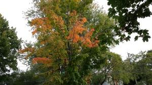 Autumnarrives